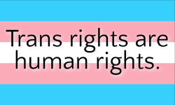 Trans pride flag with legend: Trans rights are human rights.